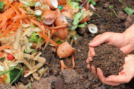 Mes del Compostaje: cómo transformar los residuos en abono en casa
