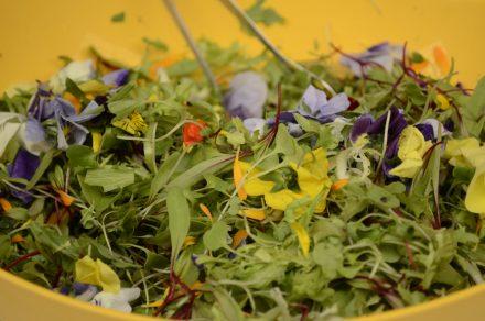 Flores comestibles para embellecer (y nutrir) tus platos