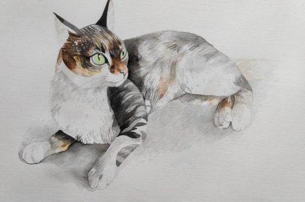 Ilustradora transforma tu gatito en una pieza de arte