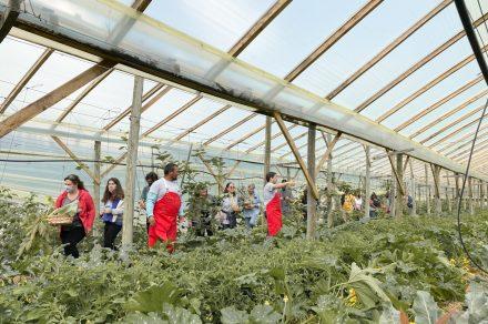 Santa Rosa: la huerta orgánica de Bavio que invita a vivir la experiencia de cosecha